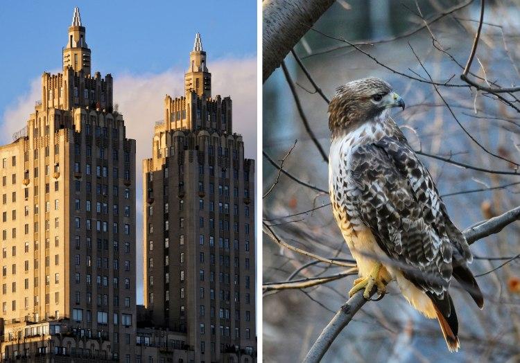 New-York-Bons-Plans-Gratuits-Central-Park