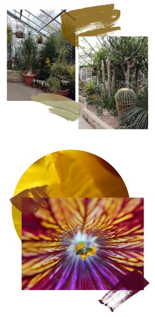 Allans-Garden-Toronto-Cactus