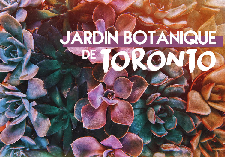 Jardin-Botanique-Toronto-Allan-Gardens