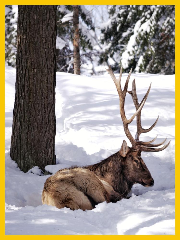 Parc-Omega-Cerf-Canada
