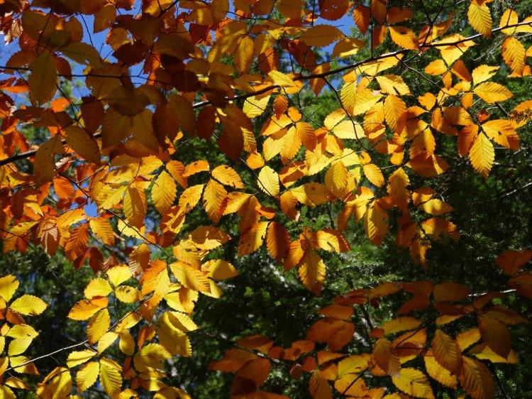 Lumière sur feuilles jaunes