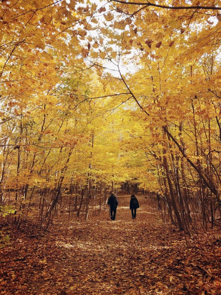Promenade sur et sous feuilles jaunes