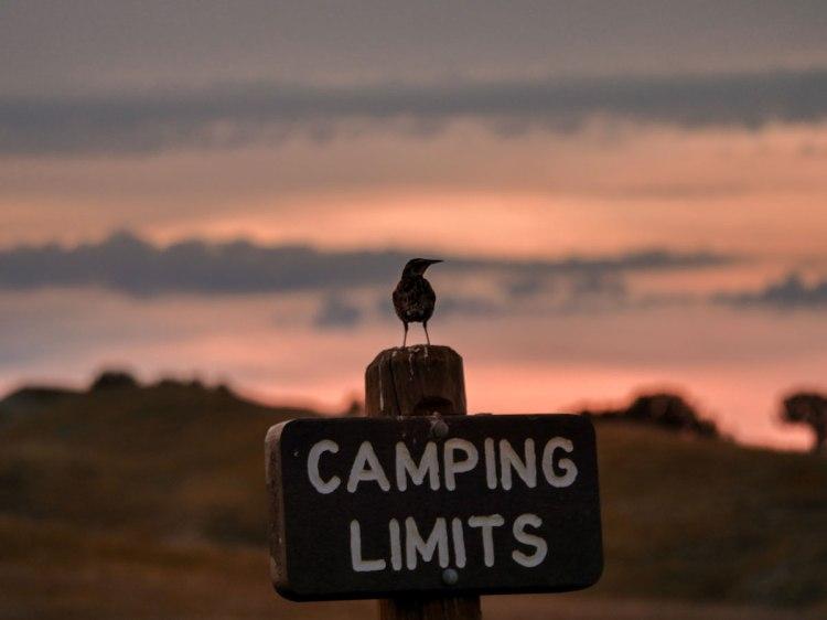 Badlands-National-Park-bird-whereiscoralie