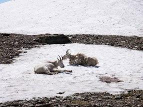 Glacier National Park Hidden Lake Trail (14)