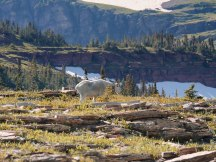 Glacier National Park Hidden Lake Trail (24)