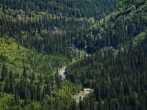 Glacier National Park Hidden Lake Trail (3)