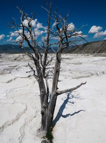 Mammoth Hot Springs Yellowstone (15)
