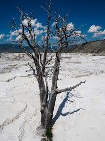 Mammoth Hot Springs Yellowstone (15)