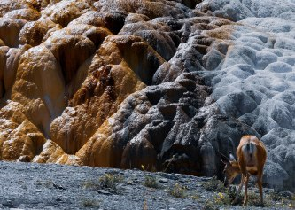 Mammoth Hot Springs Yellowstone (7)