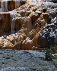 Mammoth Hot Springs Yellowstone (8)