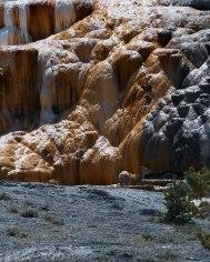 Mammoth Hot Springs Yellowstone (8)