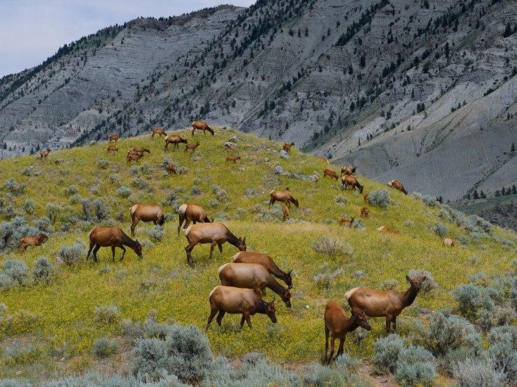 Yellowstone prairies