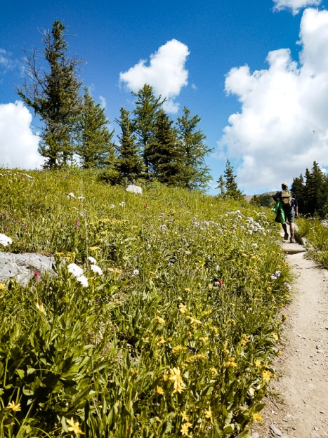 healy pass trail banff national park (14)
