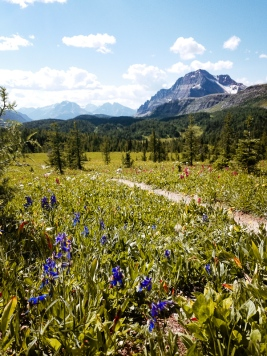 healy pass trail banff national park (15)