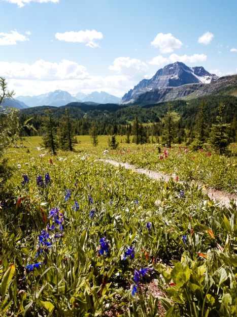 healy pass trail banff national park (15)