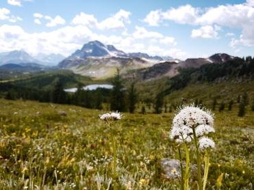 healy pass trail banff national park (17)
