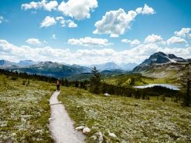 healy pass trail banff national park (24)