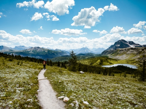 healy pass trail banff national park (24)