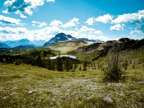 healy pass trail banff national park (25)