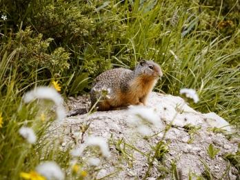 healy pass trail banff national park (29)