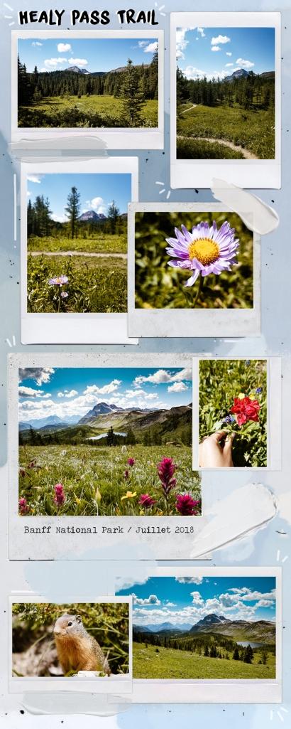 healy pass trail banff national park
